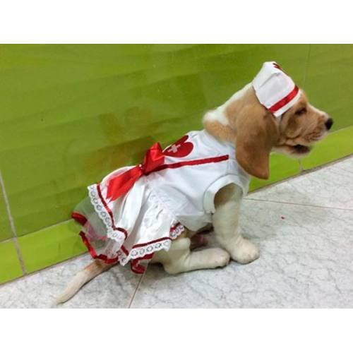 Disfraz de enfermera para perro