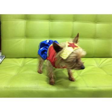 Disfraz perrito maravilla