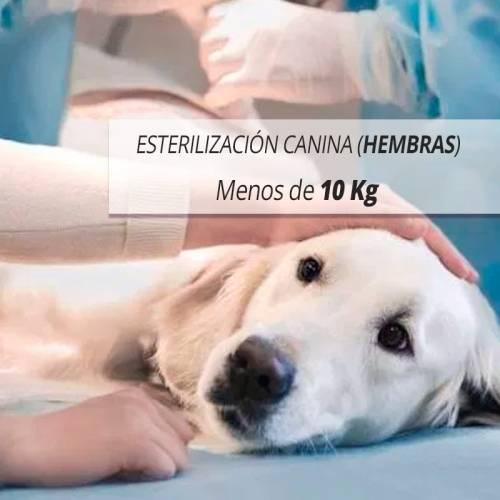 MENOS DE 10 Kg DE PESO, ESTERILIZACIÓN CANINA (HEMBRAS)