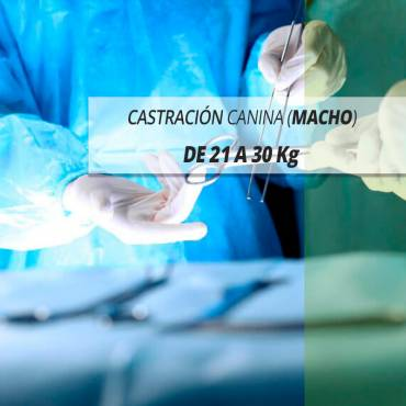 21 A 30 Kg DE PESO, CASTRACIÓN CANINA (MACHO)