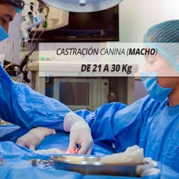 21 A 30 Kg DE PESO, ESTERILIZACIÓN CANINA (HEMBRAS)