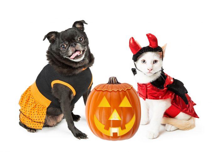 precauciones con el disfraz de tu mascota
