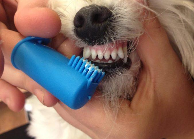 dientes sanos perros