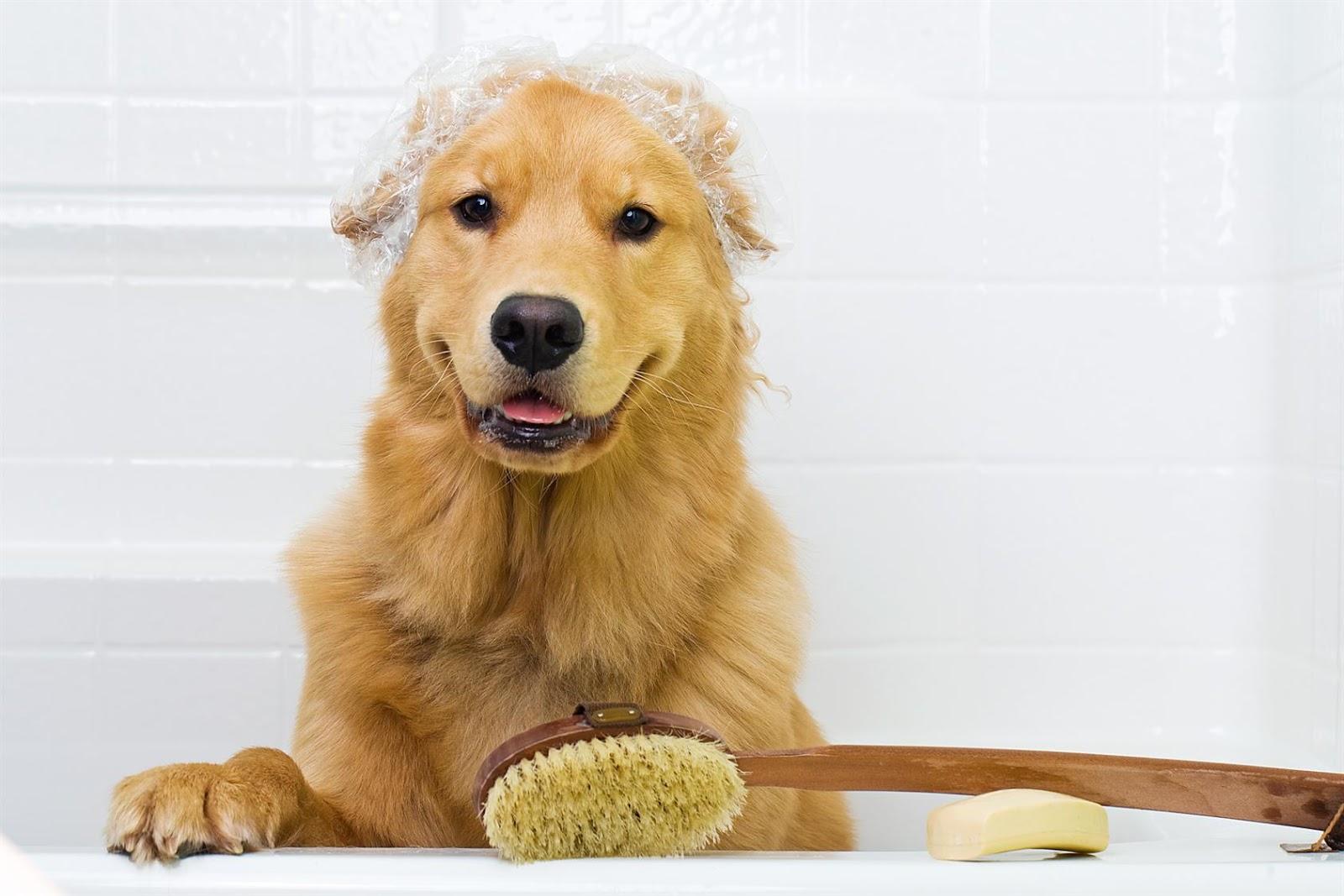 grooming para perros bogota
