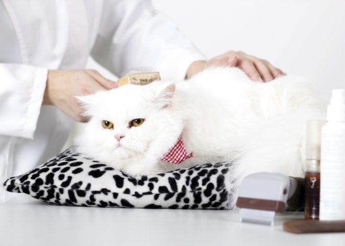 grooming para gatos bogota