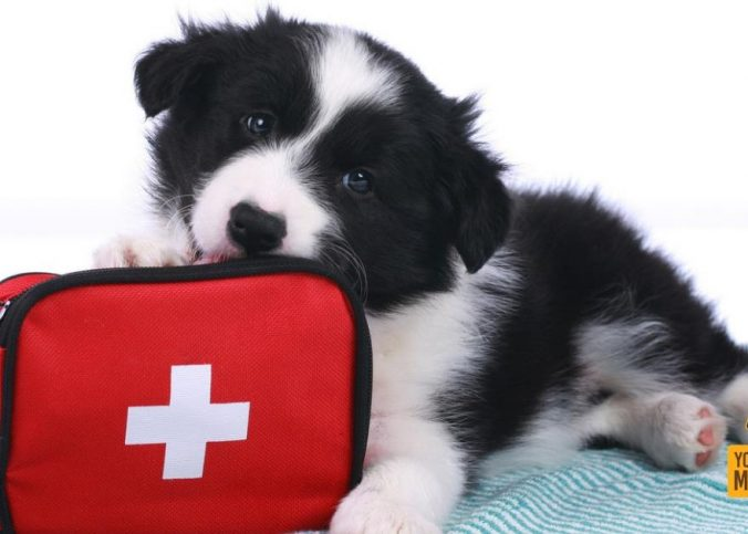 urgencias veterinarias 24 horas