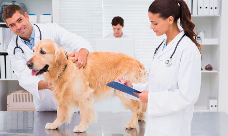 empleo líder médico veterinario