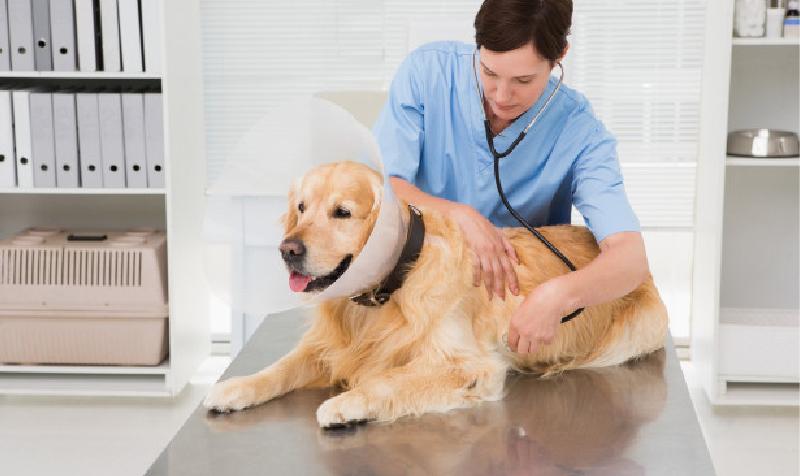 empleo médico veterinario
