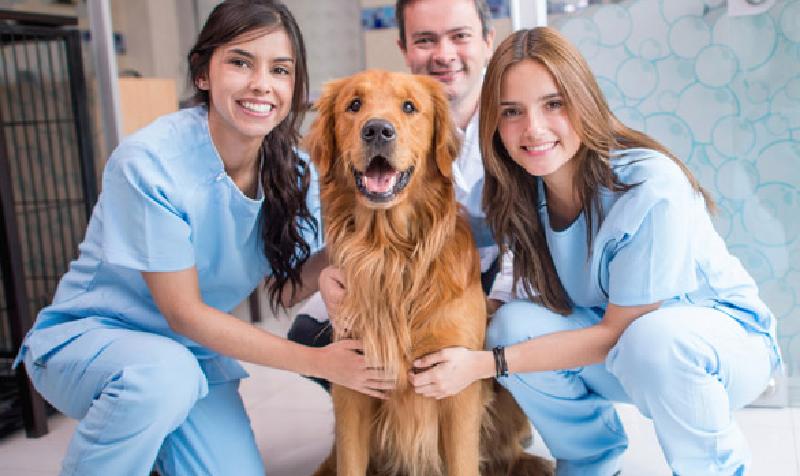 practica en medicina veterinaria