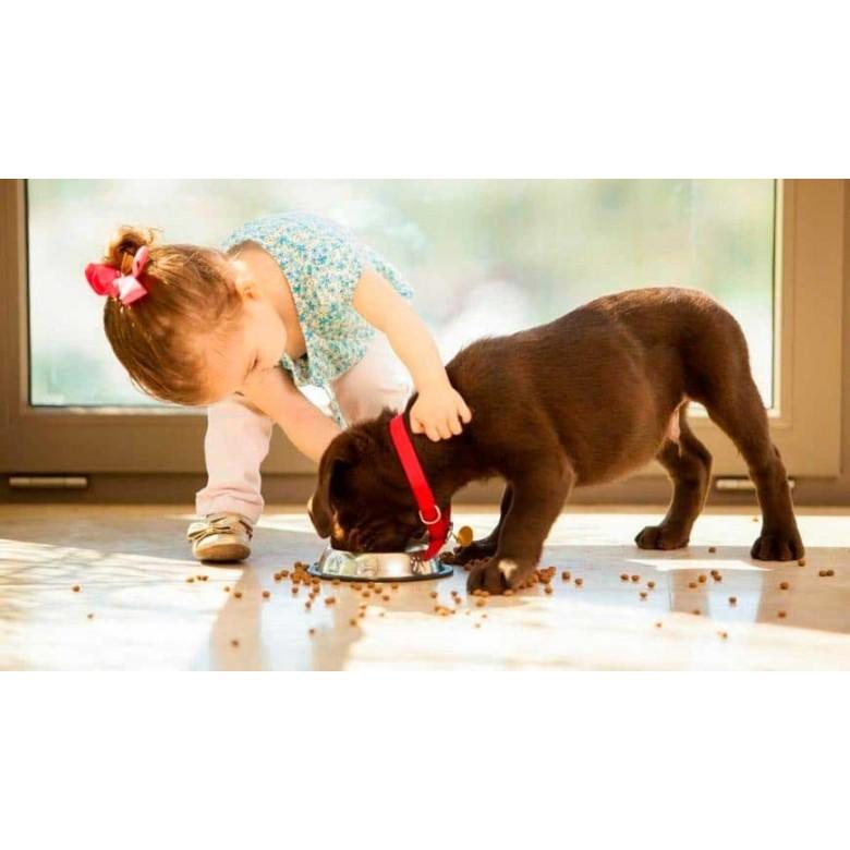 Cuidados del cachorro