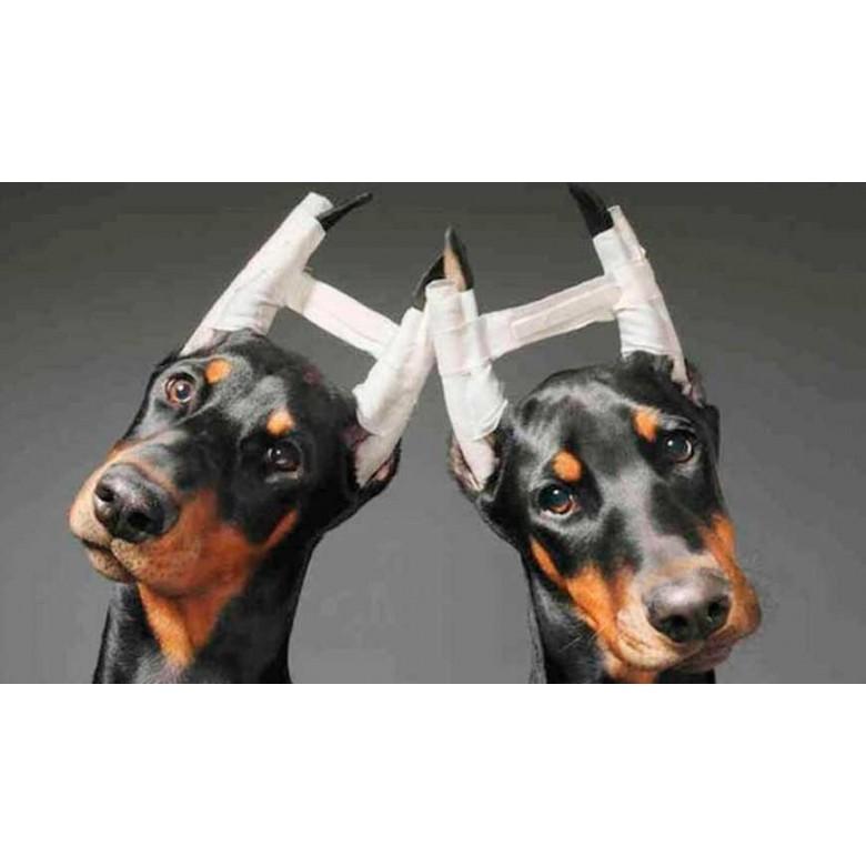 No le cortes las orejas a tu perrito